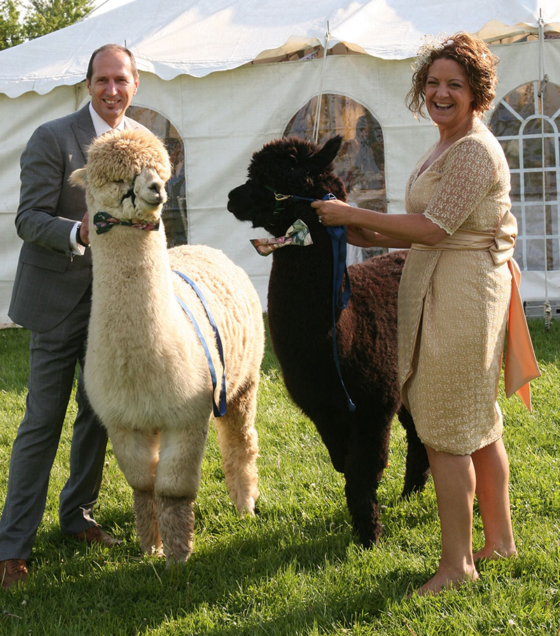 Simply Alpaca Weddings