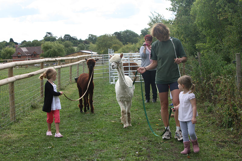 Simply Alpaca Party