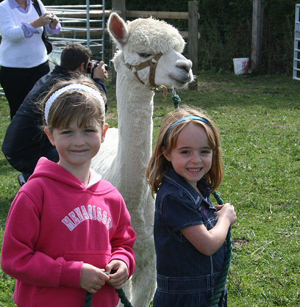 Simply Alpaca Party